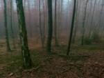 https://www.jansilar.cz:443/files/gimgs/th-24_20_301120142578.jpg